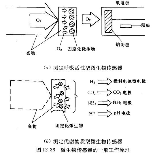 微生物传感器的基本工作原理_技术资讯_资讯_仪器交易