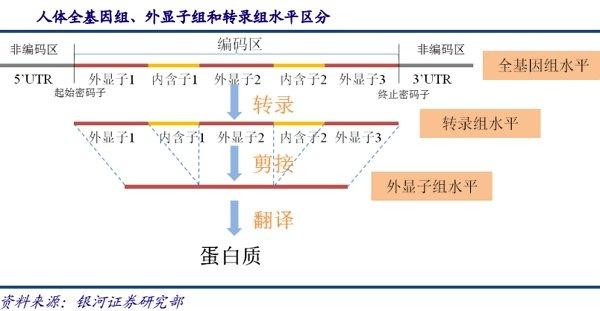 目前基因检测常见手段包括聚合酶链式反应   (pcr),荧光原位杂交技术